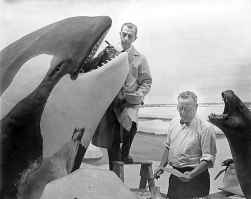 Ray De Lucia and Matt Kalmenoff working on Killer Whale Group, Hall of Ocean Life, 1967, American Museum of Natural History, Photographer: Alex J. Rota. Image and original data provided by Library, American Museum of Natural History