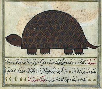 Author: Zakariya ibn Muhammad Qazwini; Scribe: Muhammad ibn Muhammad Shakir Ruzmah-'i Nathani, Illustration: A Turtle; Leaf from Turkish Version of the Wonders of Creation, 1121 AH/AD 1717. The Walters Art Museum