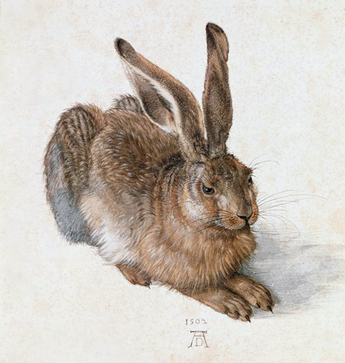 Albrecht Dürer, Hare (A Young Hare), 1502, Graphische Sammlung Albertina. Image and original data: Erich Lessing Culture and Fine Arts Archives/ART RESOURCE, N.Y.
