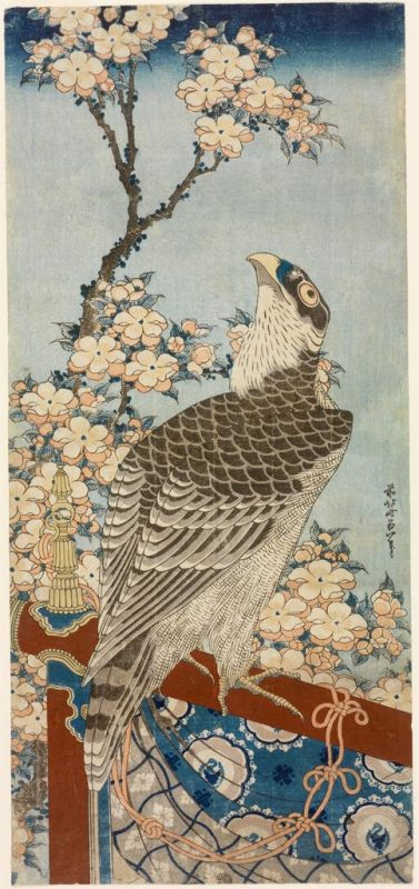 Katsushika Hokusai (artist), Moriya Jihei (publisher); Hawk and Cherry Blossoms (Kaido ni taka), from a set of five untitled prints of animals; ca. 1834. Image © Museum of Art, Rhode Island School of Design, Providence