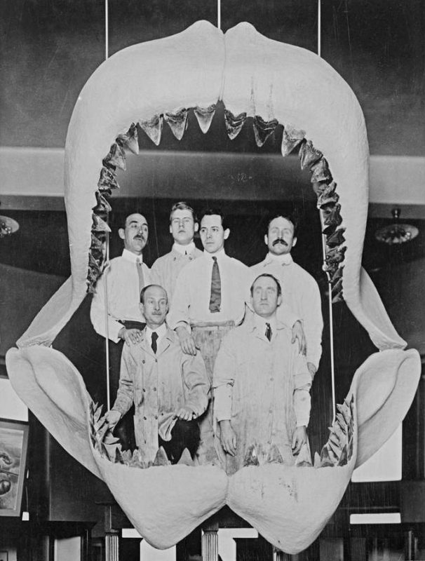 Paleontology staff posing with Fossil Shark Jaws. Image and original data provided by Library, American Museum of Natural History, Anthropology Department, American Museum of Natural History