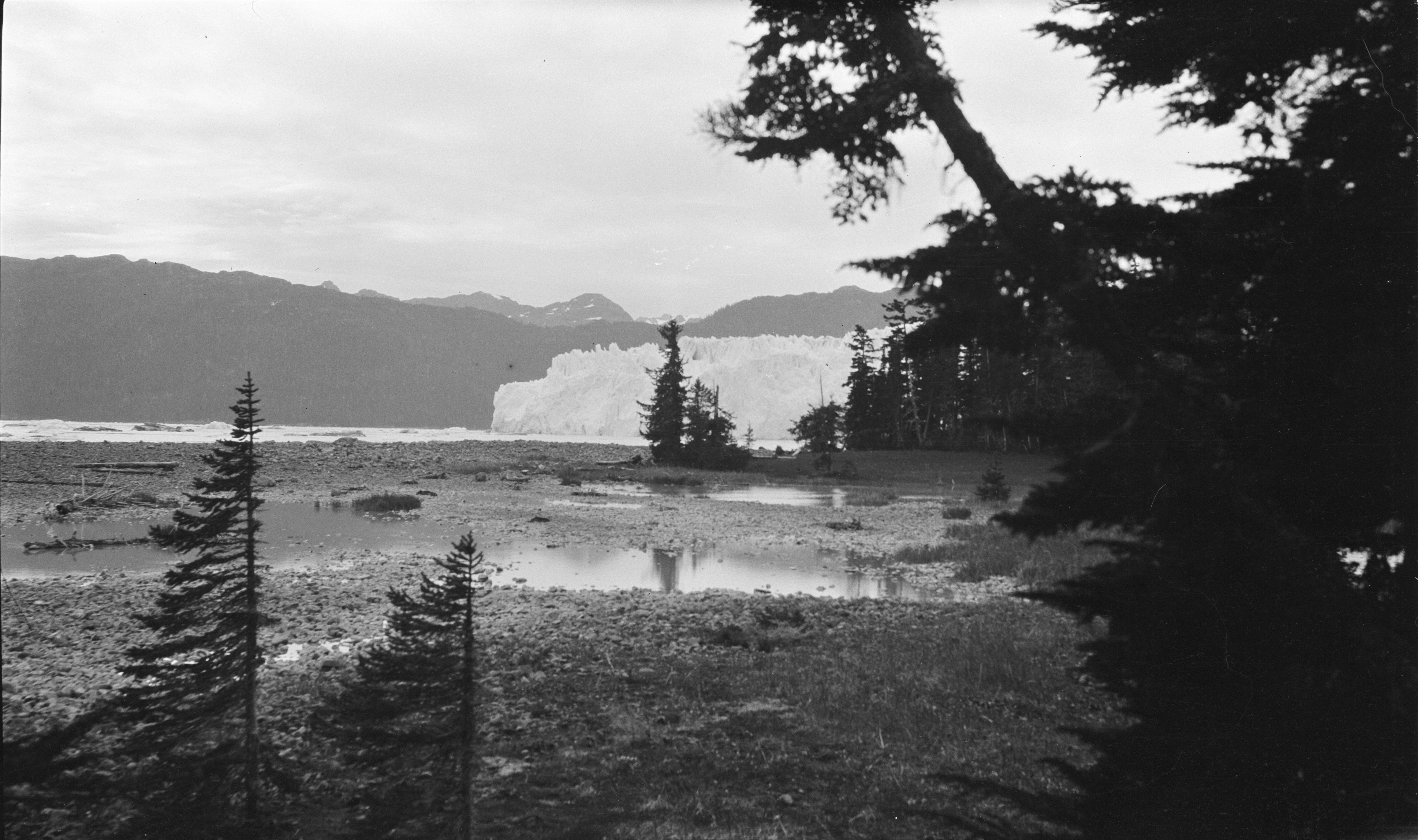 Columbia Glacier from one of Curtis sites. 1909. Prince William Sound, Valdez-Cordova, Alaska. Image provided by Cornell University.