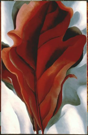 Georgia O'Keeffe. Large Dark Red Leaves on White. 1925. Image and original data provided by The Phillips Collection. © 2008 The Georgia O'Keeffe Foundation / Artists Rights Society (ARS), New York