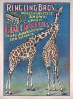 Ringling Circus Museum (Florida State University)