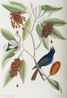Hill Ornithology Collection (Cornell University Library)