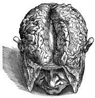 Vesalius Anatomical Illustrations (Northwestern University)