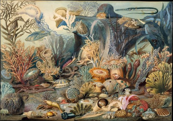 James M. Sommerville, Christian Schussele. Ocean Life. c. 1859. Image and data provided by The Metropolitan Museum of Art. Public domain.