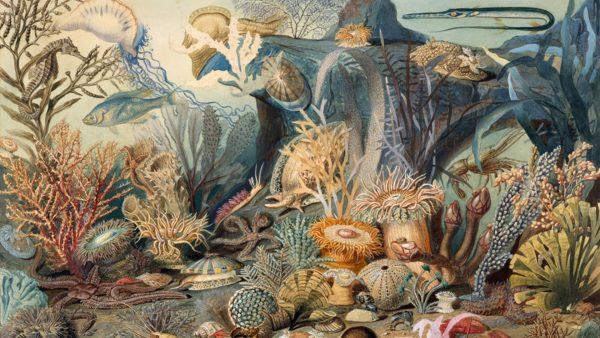 James M. Sommerville, Christian Schussele. Ocean Life