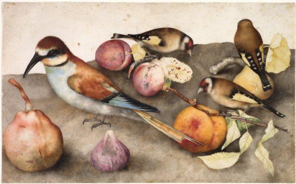 Giovanna Garzoni, Still Life with Birds and Fruit, c. 1650