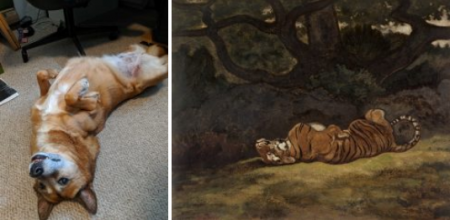 Cristina Mezuk. Petra begging for attention; Antoine-Louis Barye. Tiger Rolling. c. 1850-1869